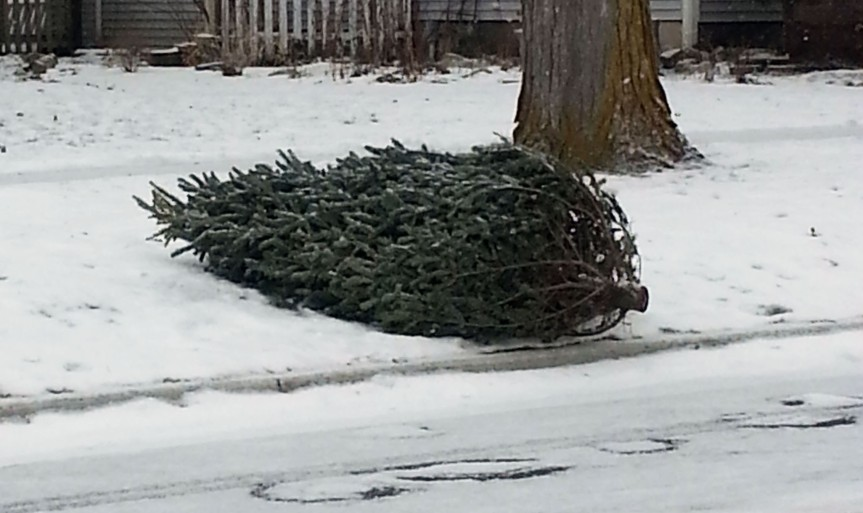 Christmas tree collection begins Jan.2